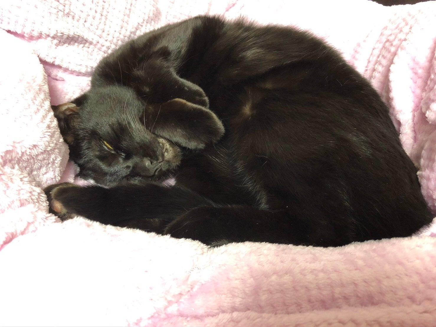 日 感謝 の 黒 猫