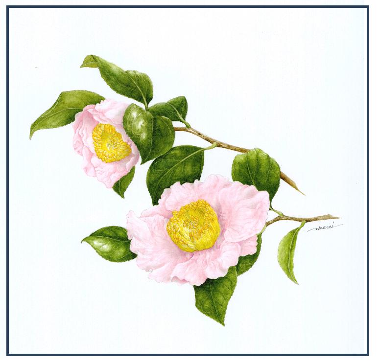 春 は あけぼの よう よう 白く なり ゆく 山際