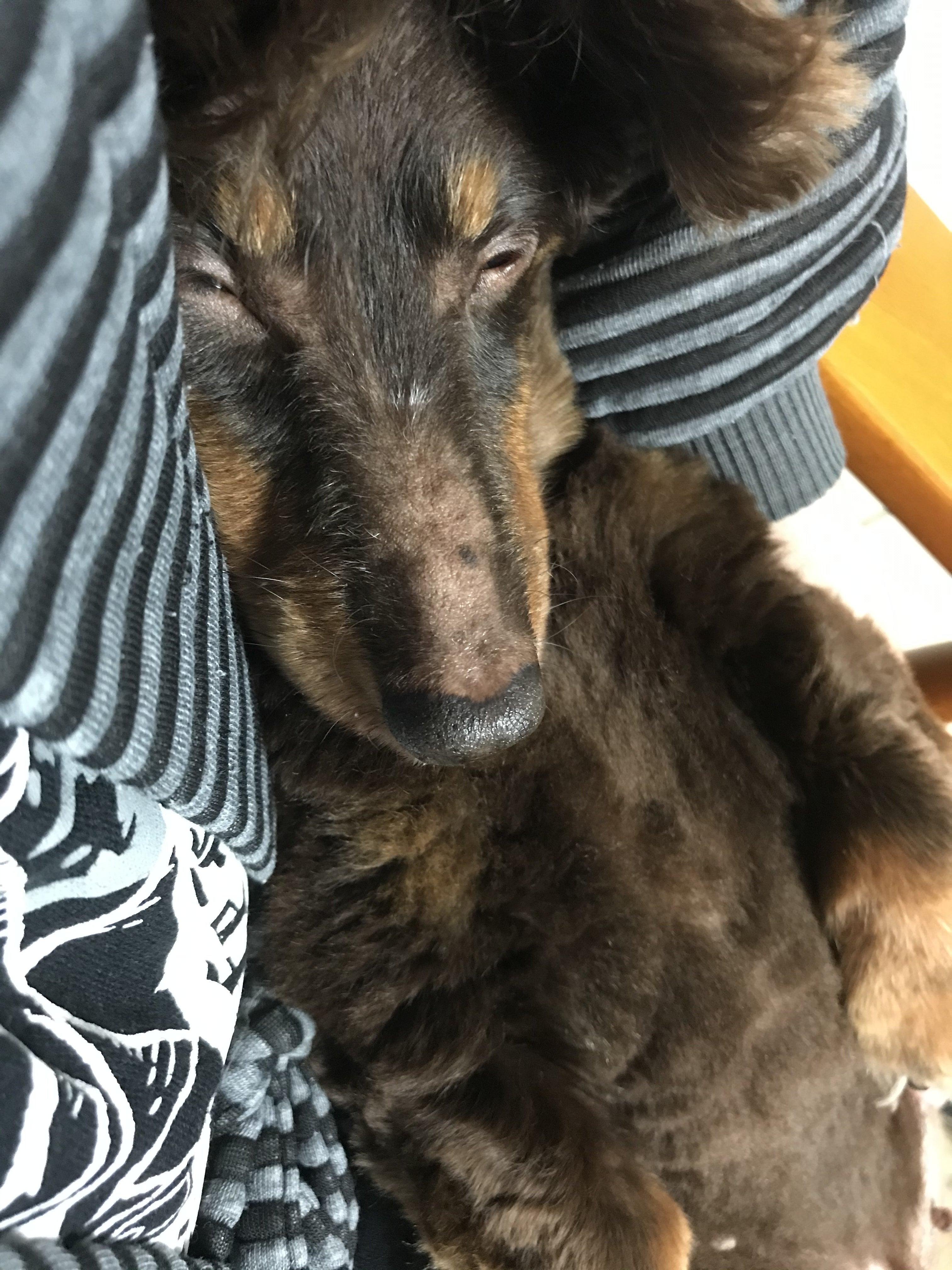 が 犬 歌 猫 寝る