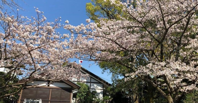桜が散るとやはり物悲しい・・・|the14thmoon.com|note