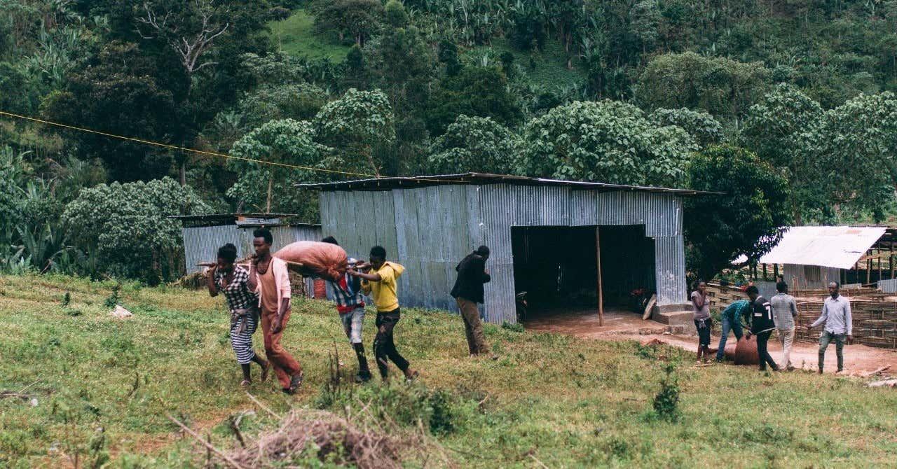 ダイレクトトレードを知ろう。エチオピアのコーヒー流通の事例。|川野優馬/LIGHT UP COFFEE|note