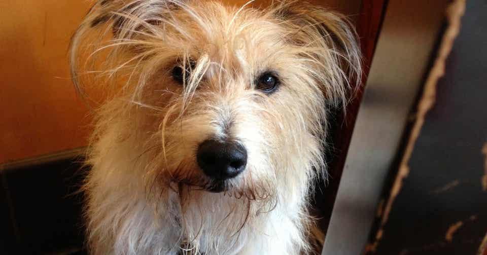 ピクちゃんがいなくなった 愛犬を失うということ ハワイからです Note