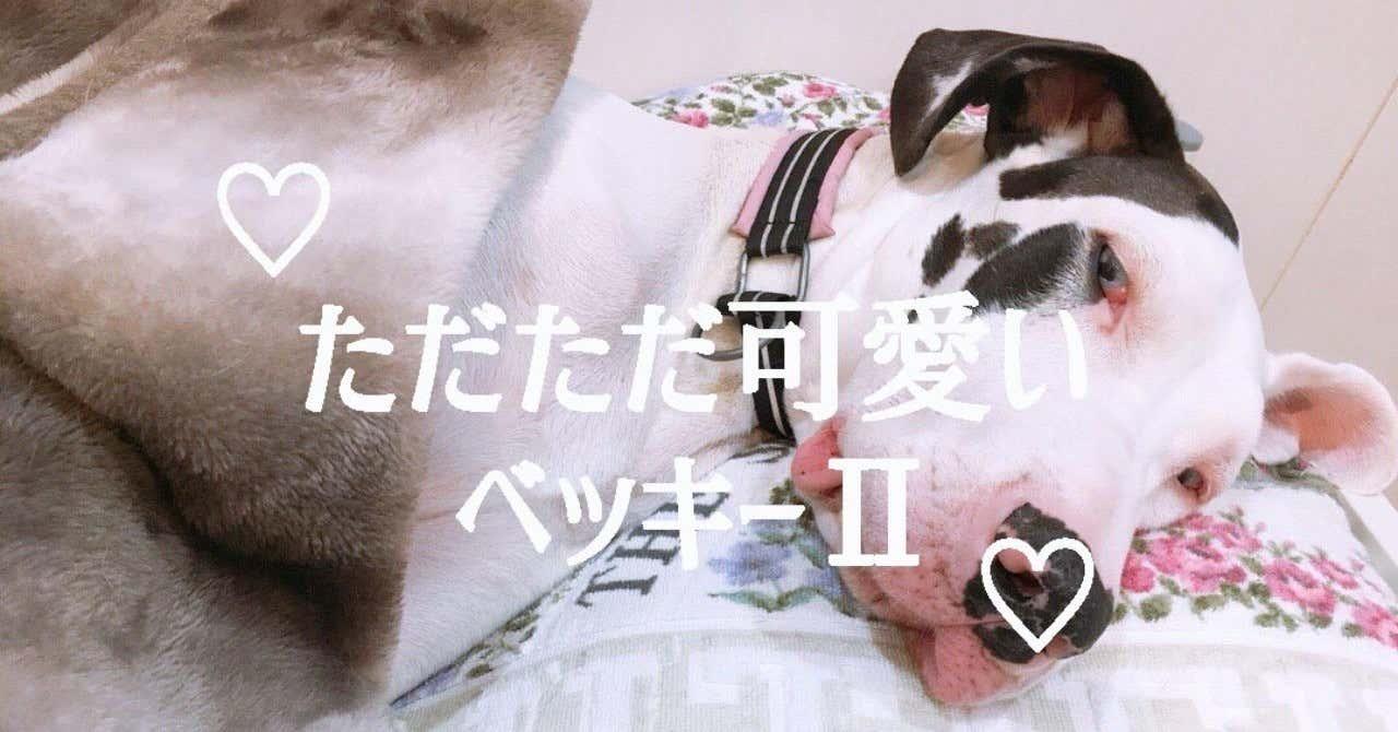ベッキー2_OGP