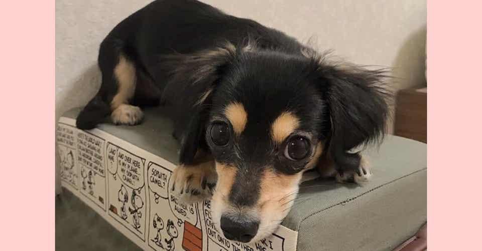 ミックス犬の人気ランキング 10種類それぞれの特徴 魅力 雑種との