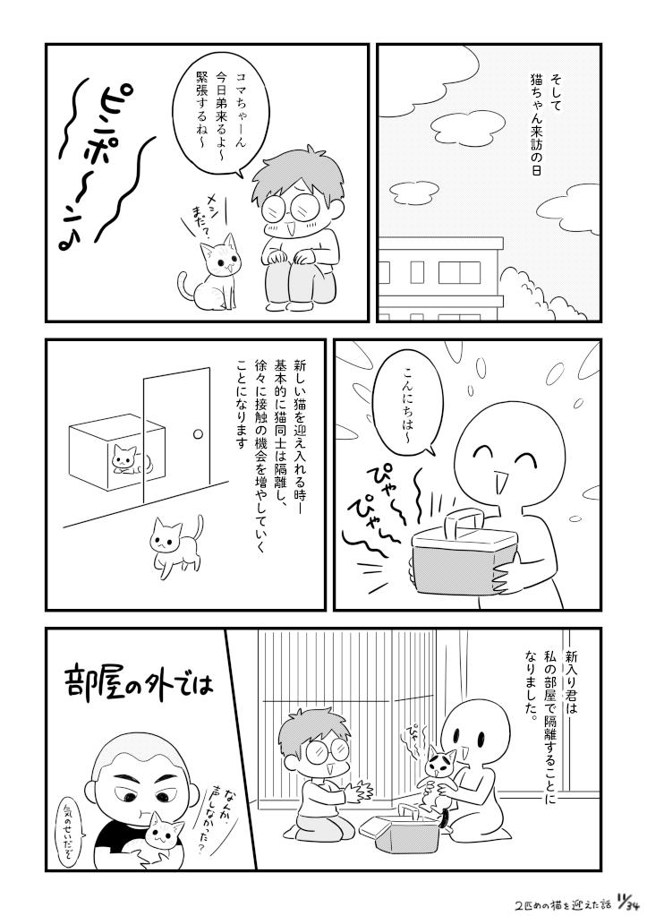 二匹目の猫を迎えた話_011