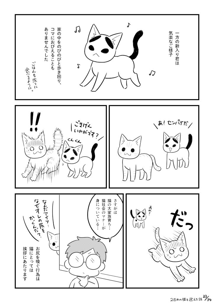 二匹目の猫を迎えた話_023
