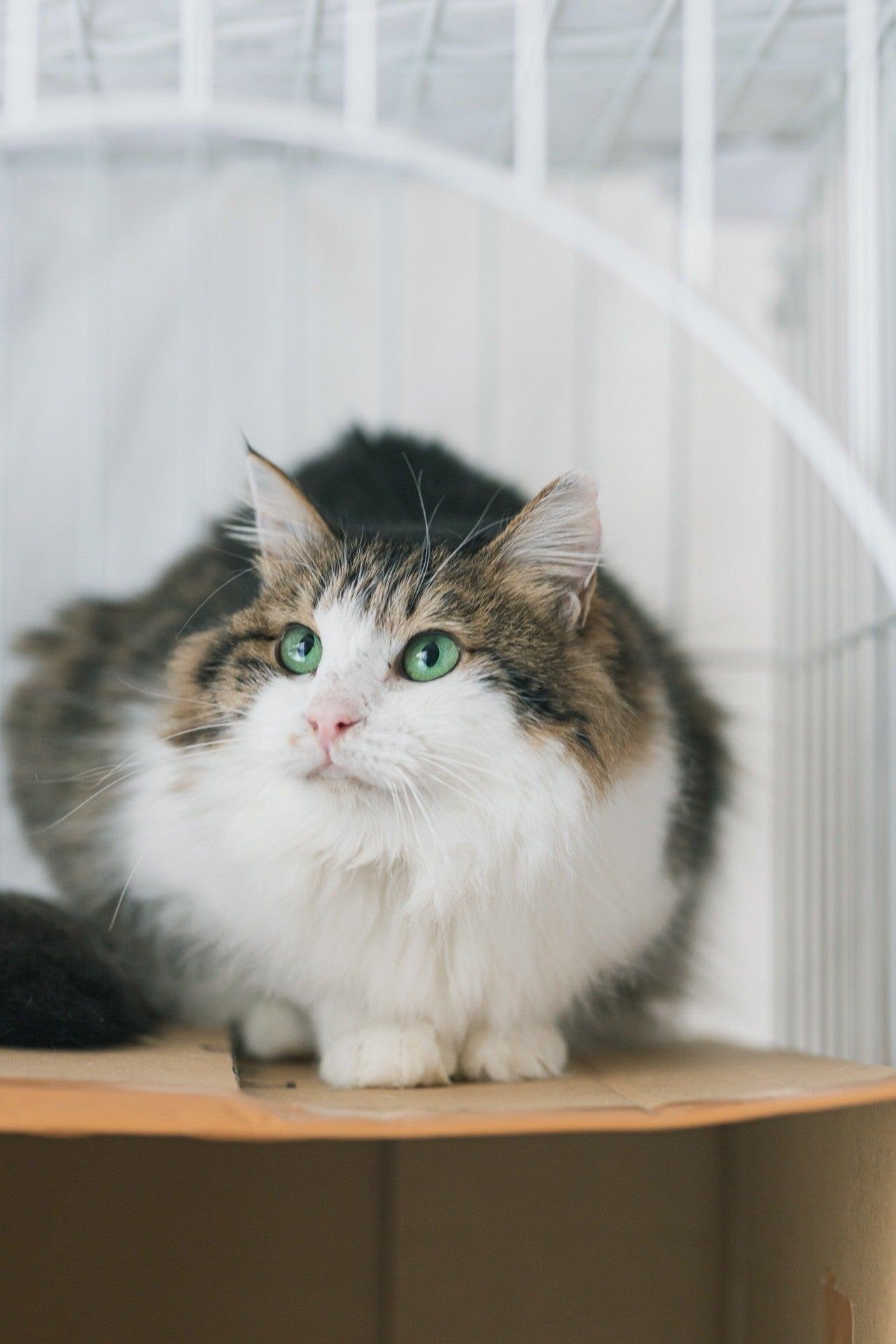 どうか 猫 怪しい な も か