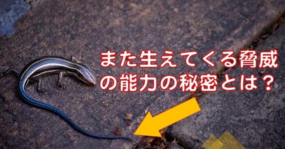 トカゲ の しっぽ 切り