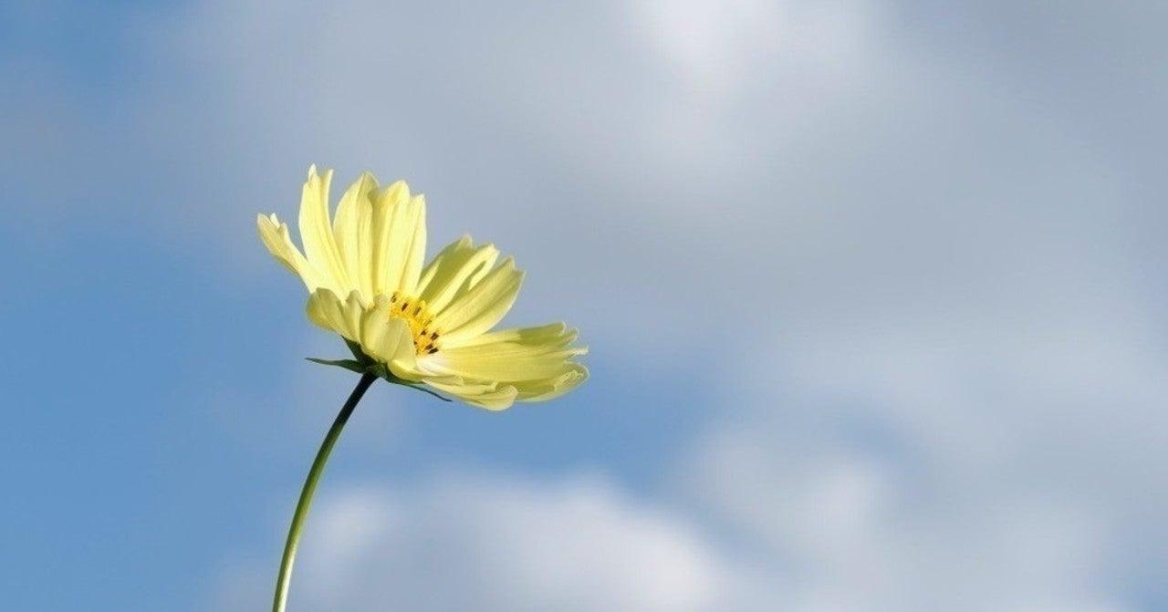 歌詞 残し について たい 花