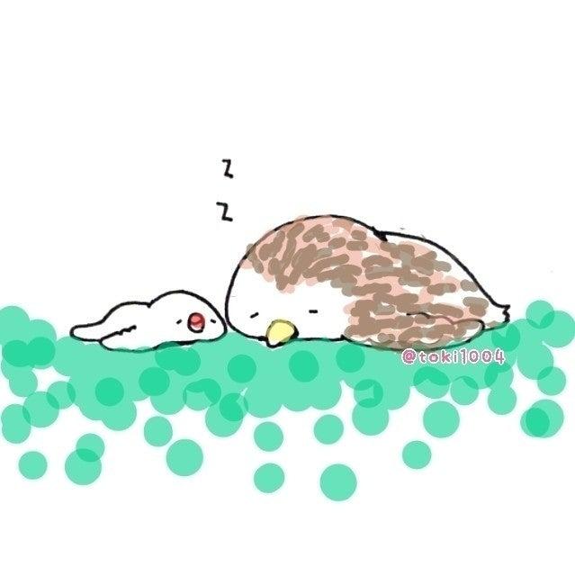 ペシャンコになって寝るフクロウさんをテレビで紹介してました 超超超超超可愛い 絵 イラスト イラストレーター お絵描き ドローイング 一発描き ボールペン 文鳥 フクロウ ふ とき 10 24 25鳥フェス大阪 Note