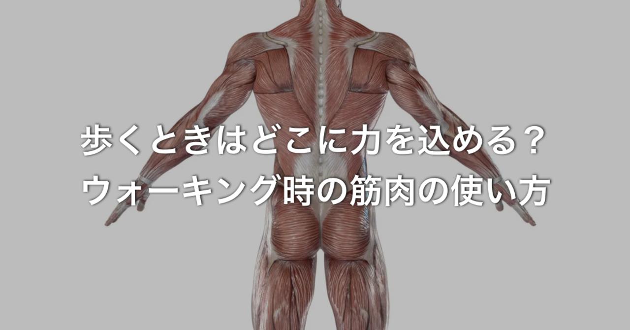 痛 お 尻 の 筋肉