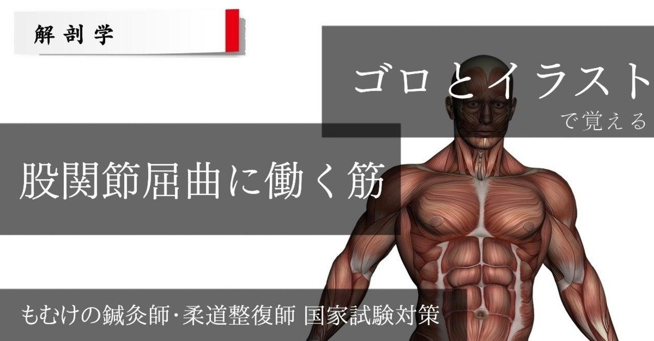 筋肉覚え方
