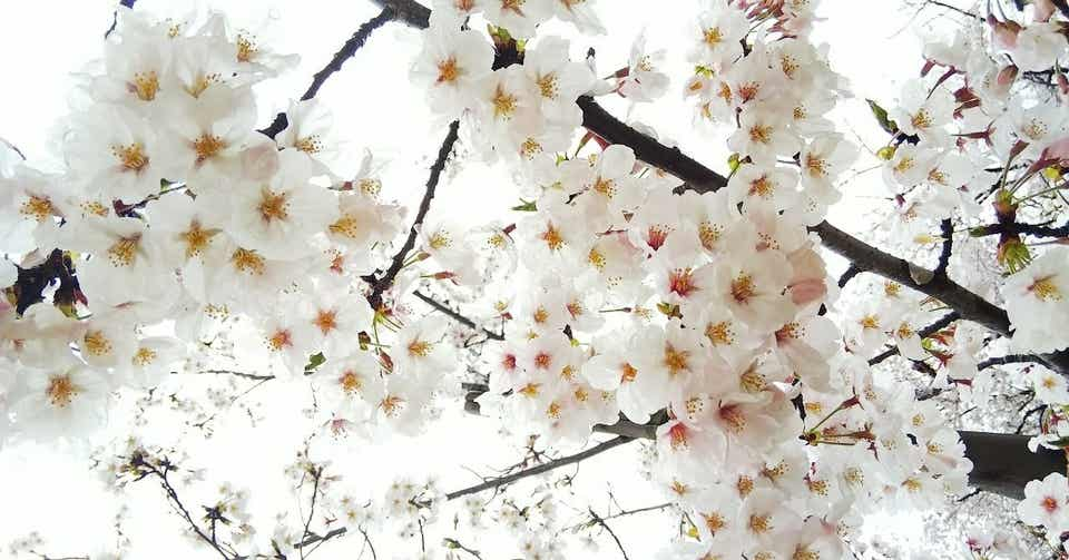 志村 けん の 追悼 番組