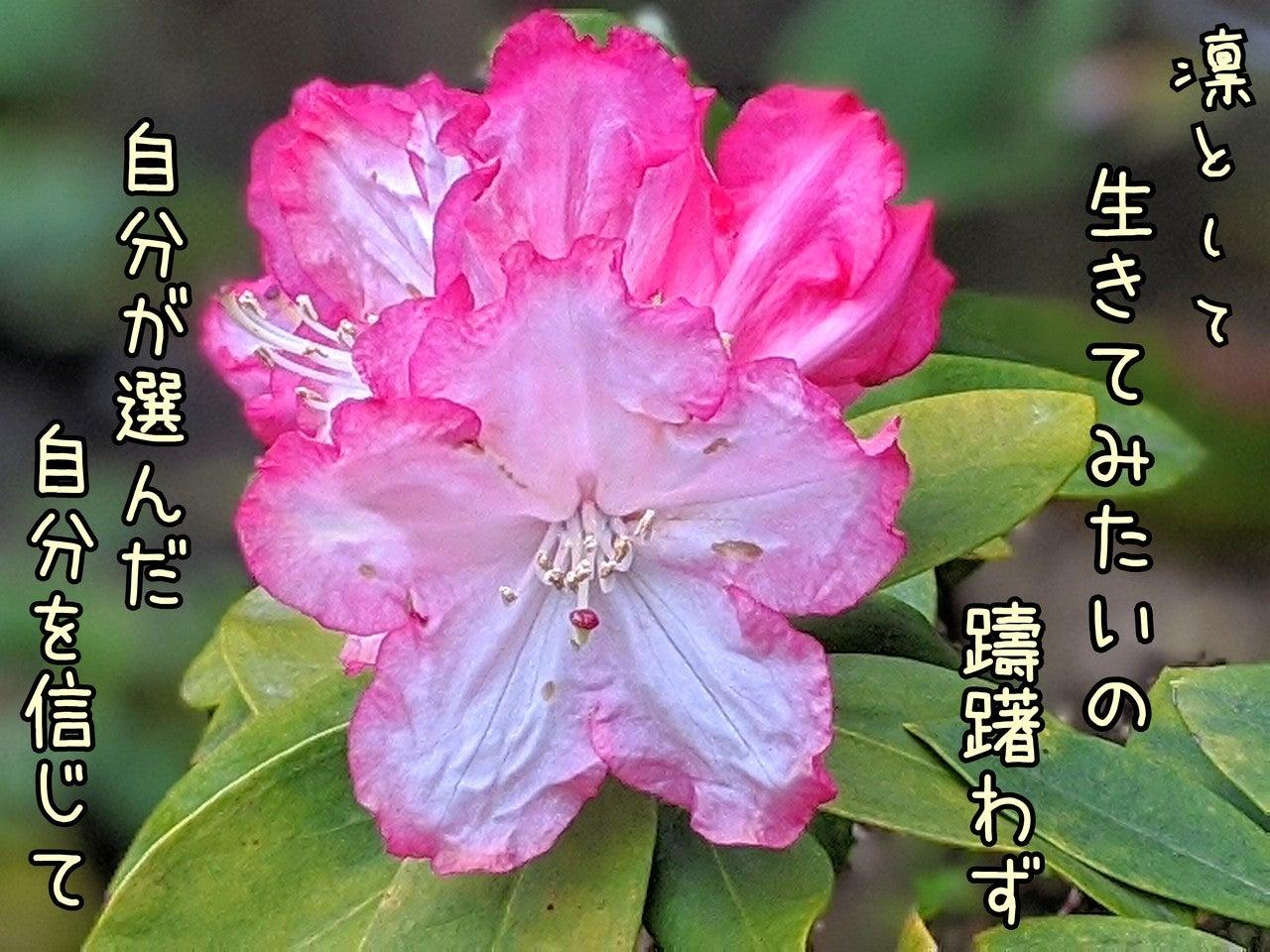 花 言葉 シャクナゲ