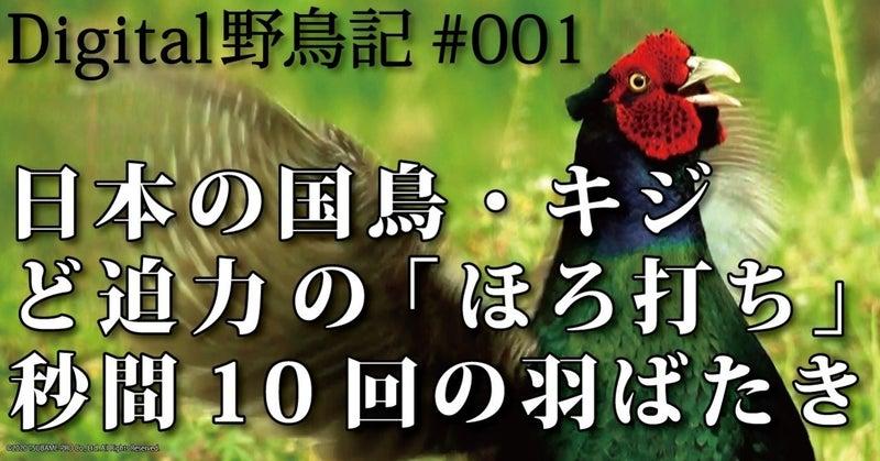 Digital野鳥記#001/日本の国鳥・キジ ど迫力の「ほろ打ち」秒間10回の ...