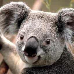 柔道整復師が骨折の保存療法を行うことについて Dr Koala Note