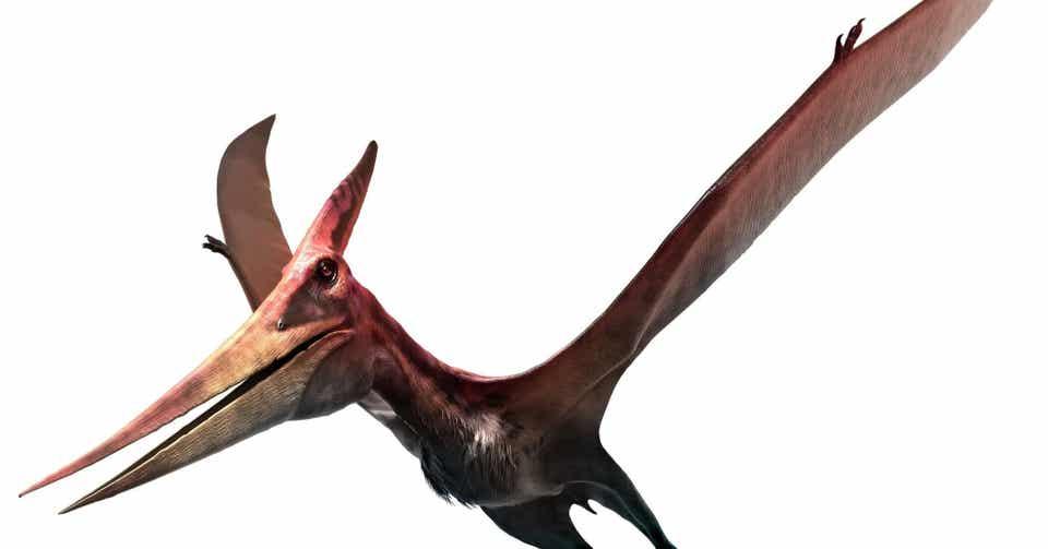 恐竜とわたし(2) ~ 翼竜プテラノドン|ノリノリ|note