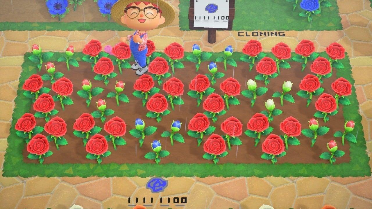 あつまれどうぶつの森 青いバラ