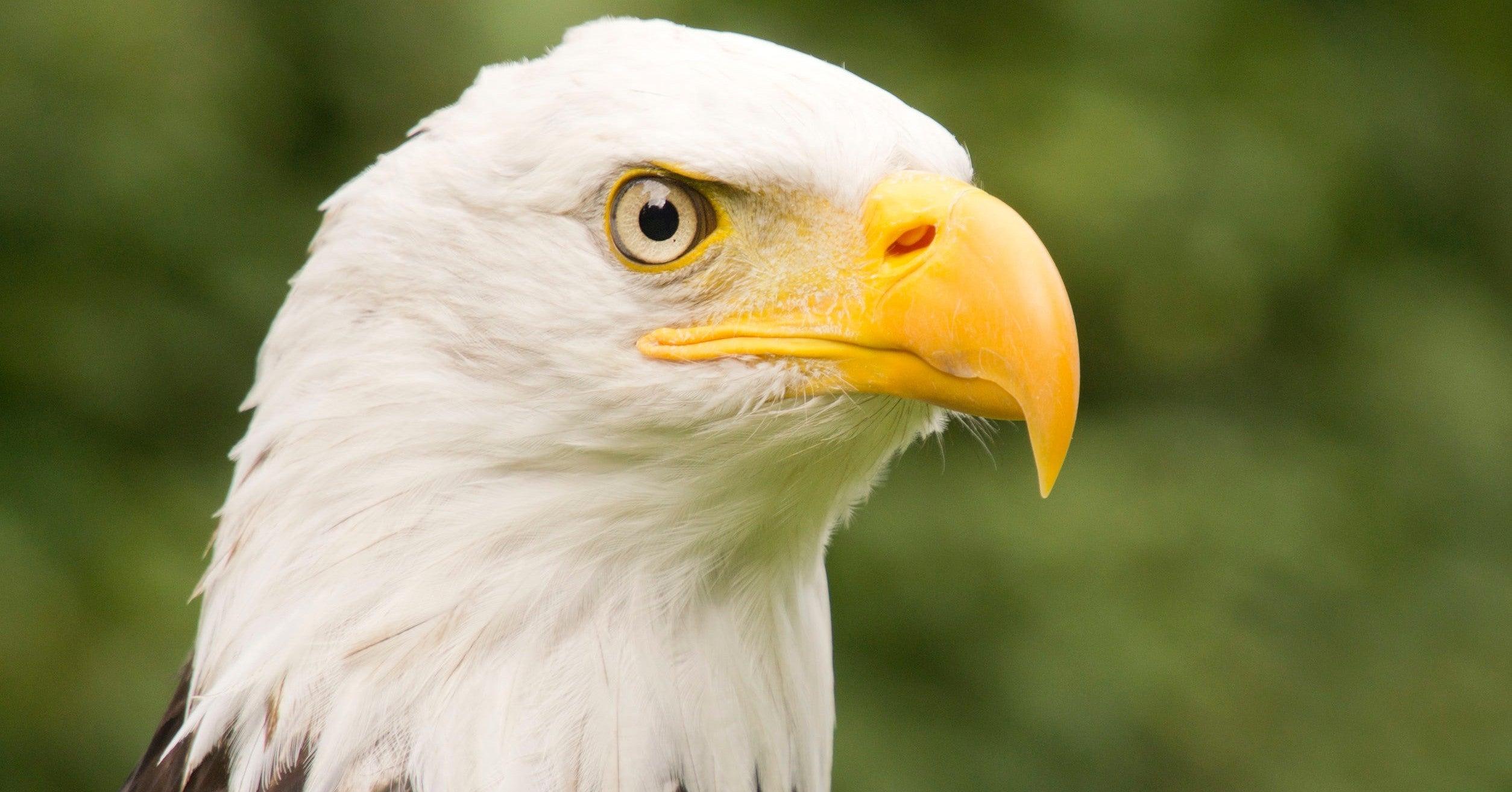 飼えない猛禽類の種類|KT|note