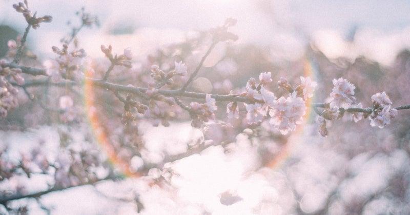 歌詞 ひらり と 桜