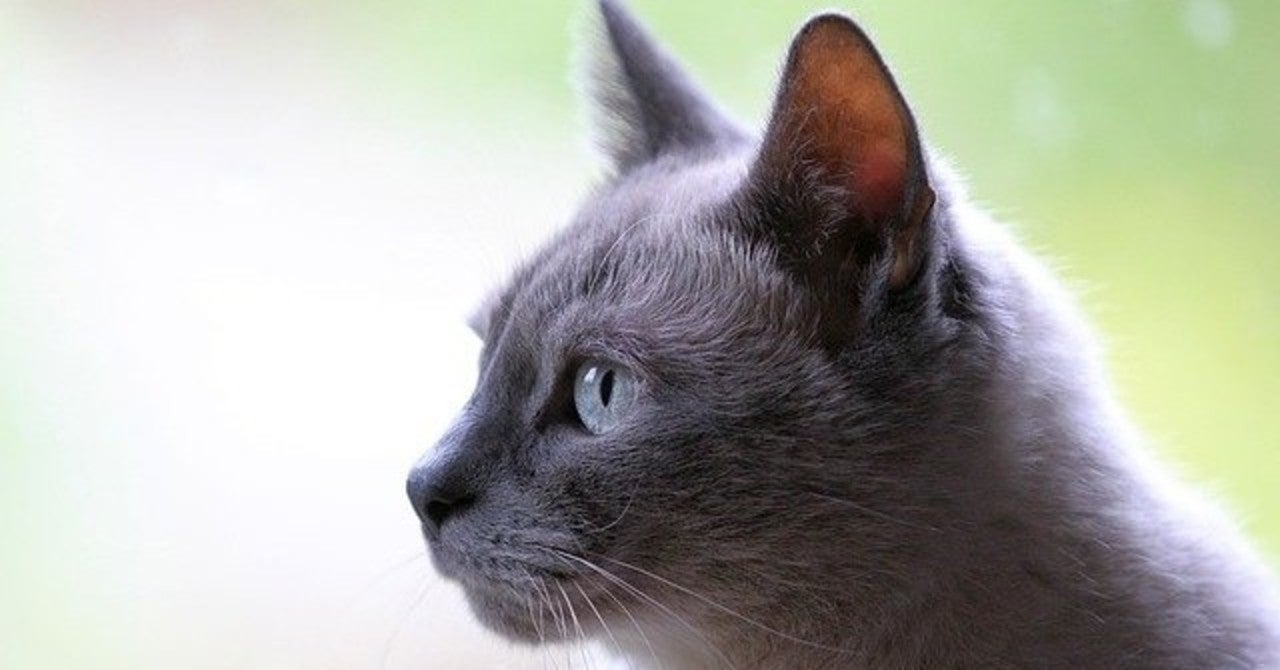 感想 なら た 文 から 読書 が 世界 消え 猫