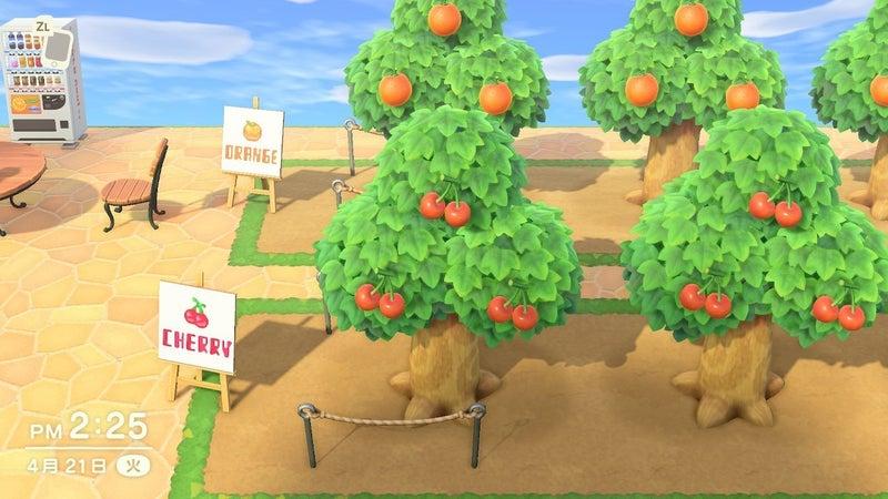 果樹 作り方 園 森 あつ