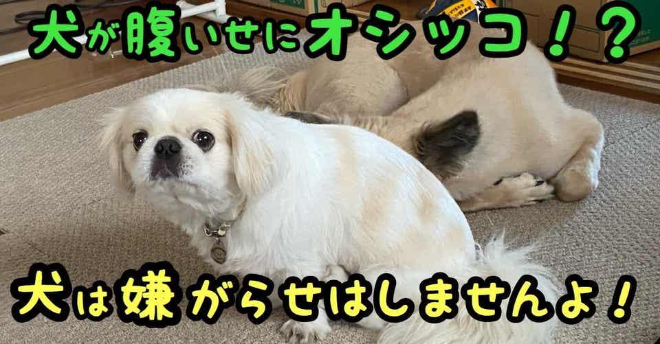 怒った腹いせに変なところでオシッコした!?いやいや、犬は嫌がらせを ...