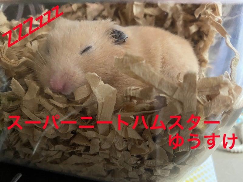 て ばかり 寝 ハムスター いつも寝ているけどハムスターの睡眠時間は1日何時間?