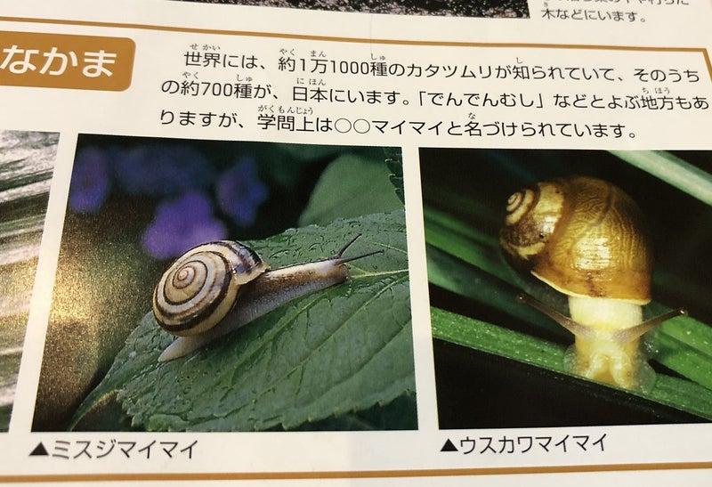 生まれ 時 カタツムリ 殻 た から