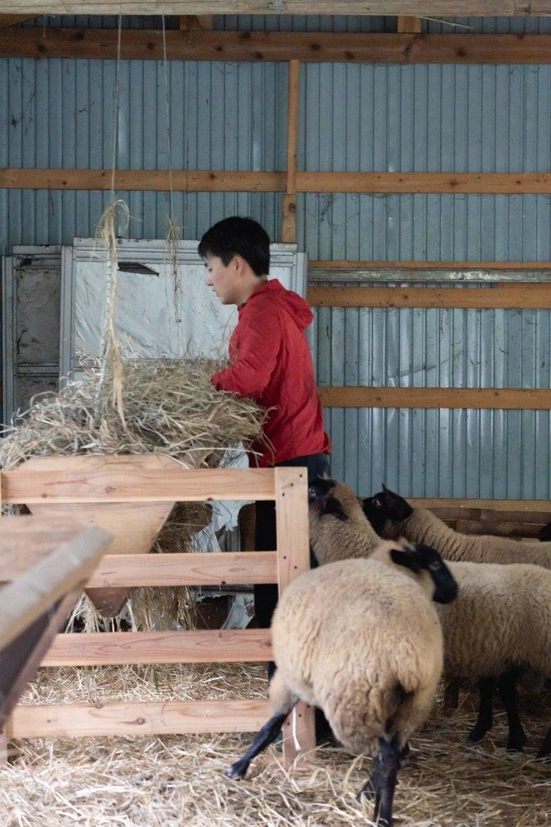夢見る は 羊 たち