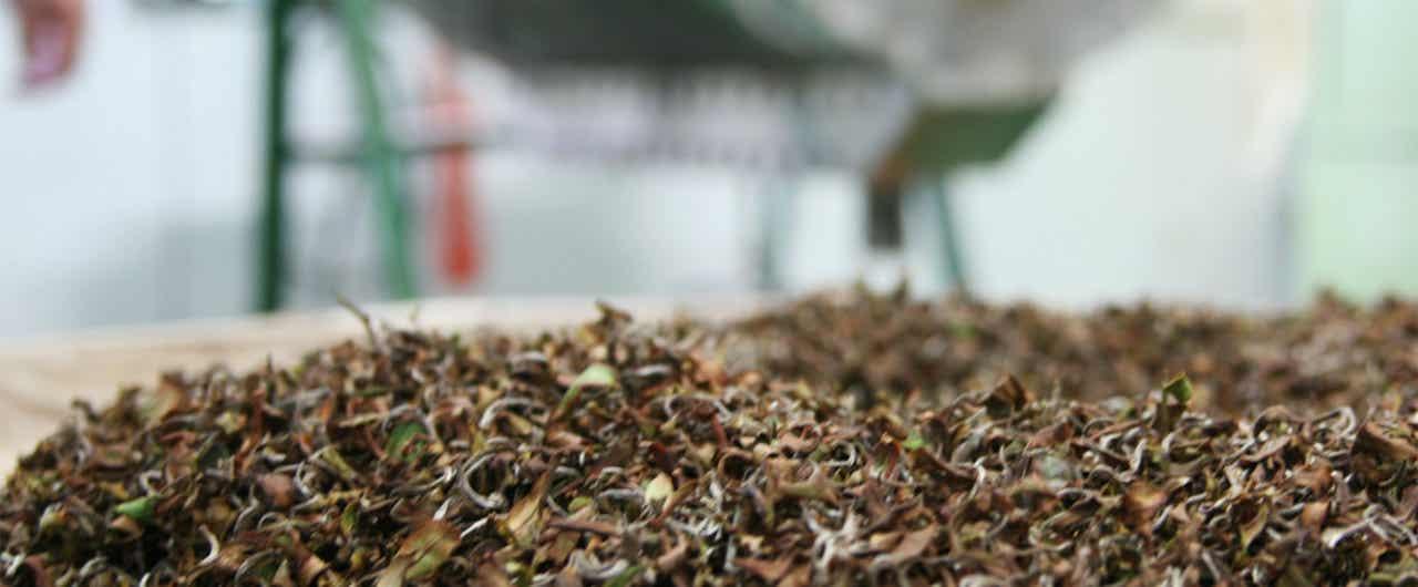 人の手が作り出す東方美人茶