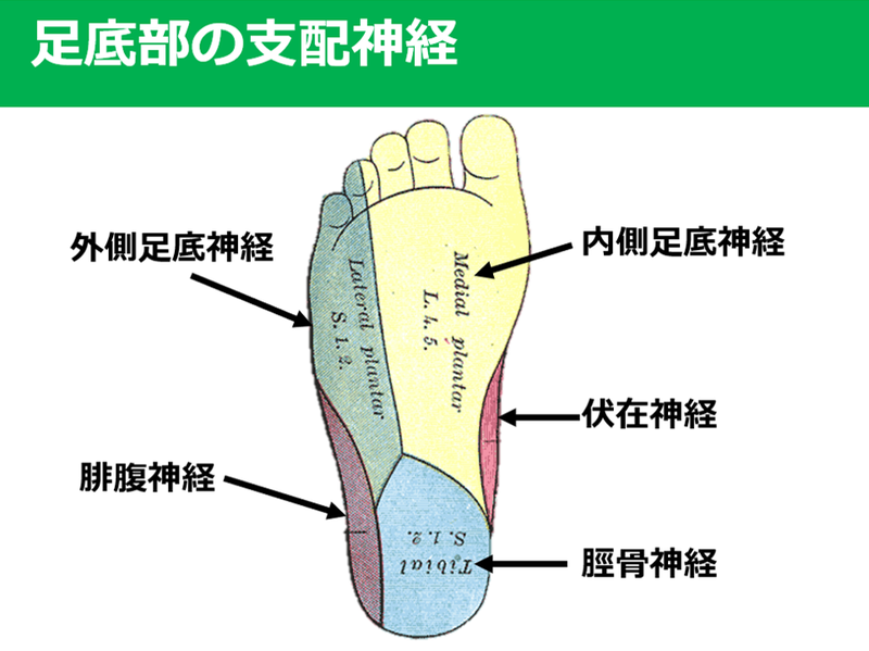 裏 外側 痛み の 足