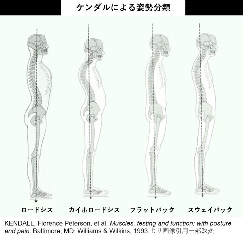 ケンダルによる姿勢分類