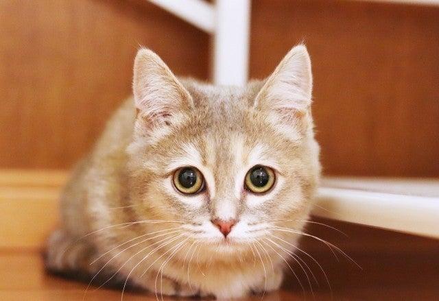 ポムさん 猫