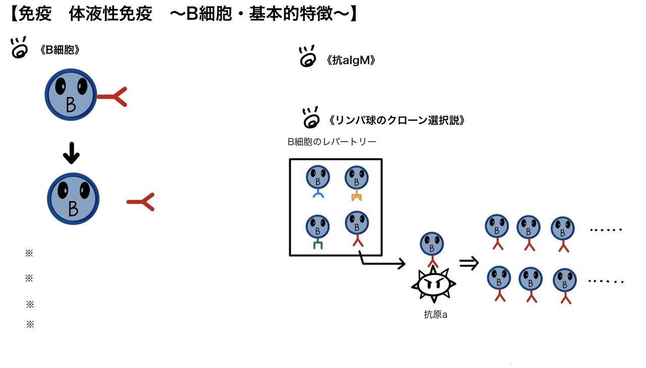 クローン選択説 (クローンせんたくせつ) - Japanese-English ...