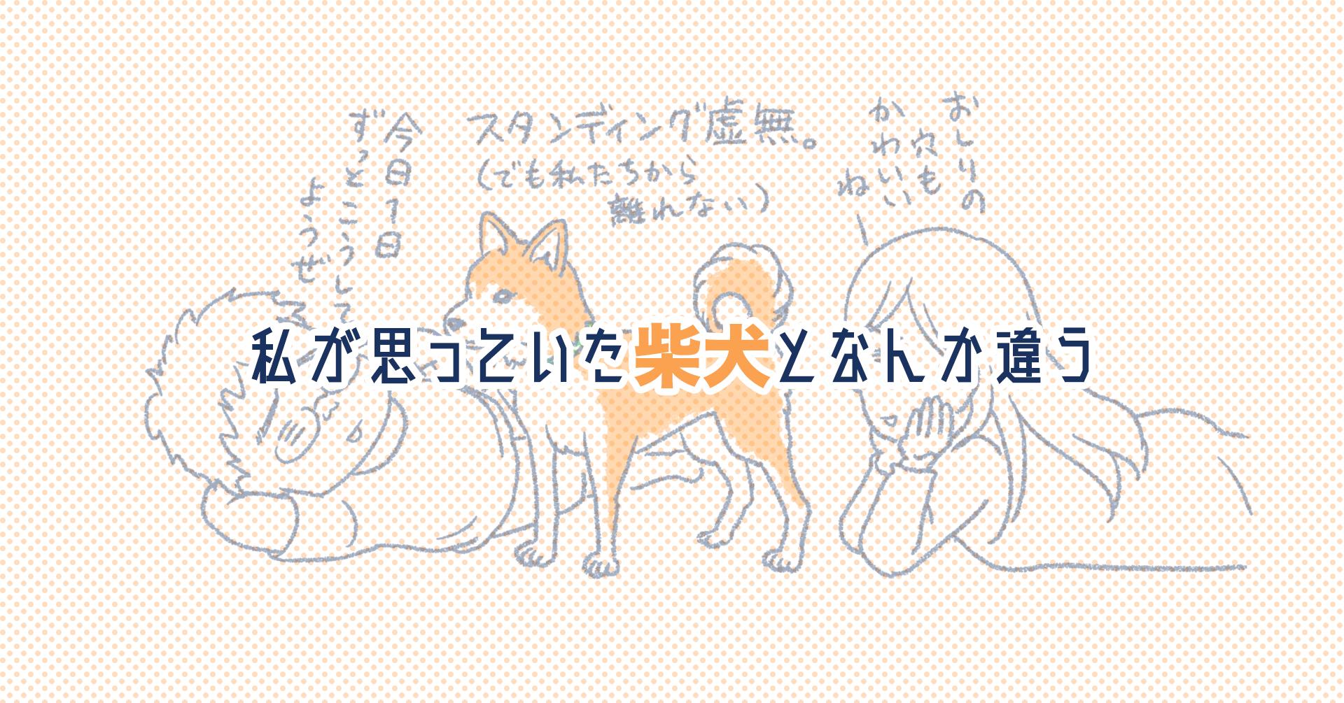 らら 柴犬