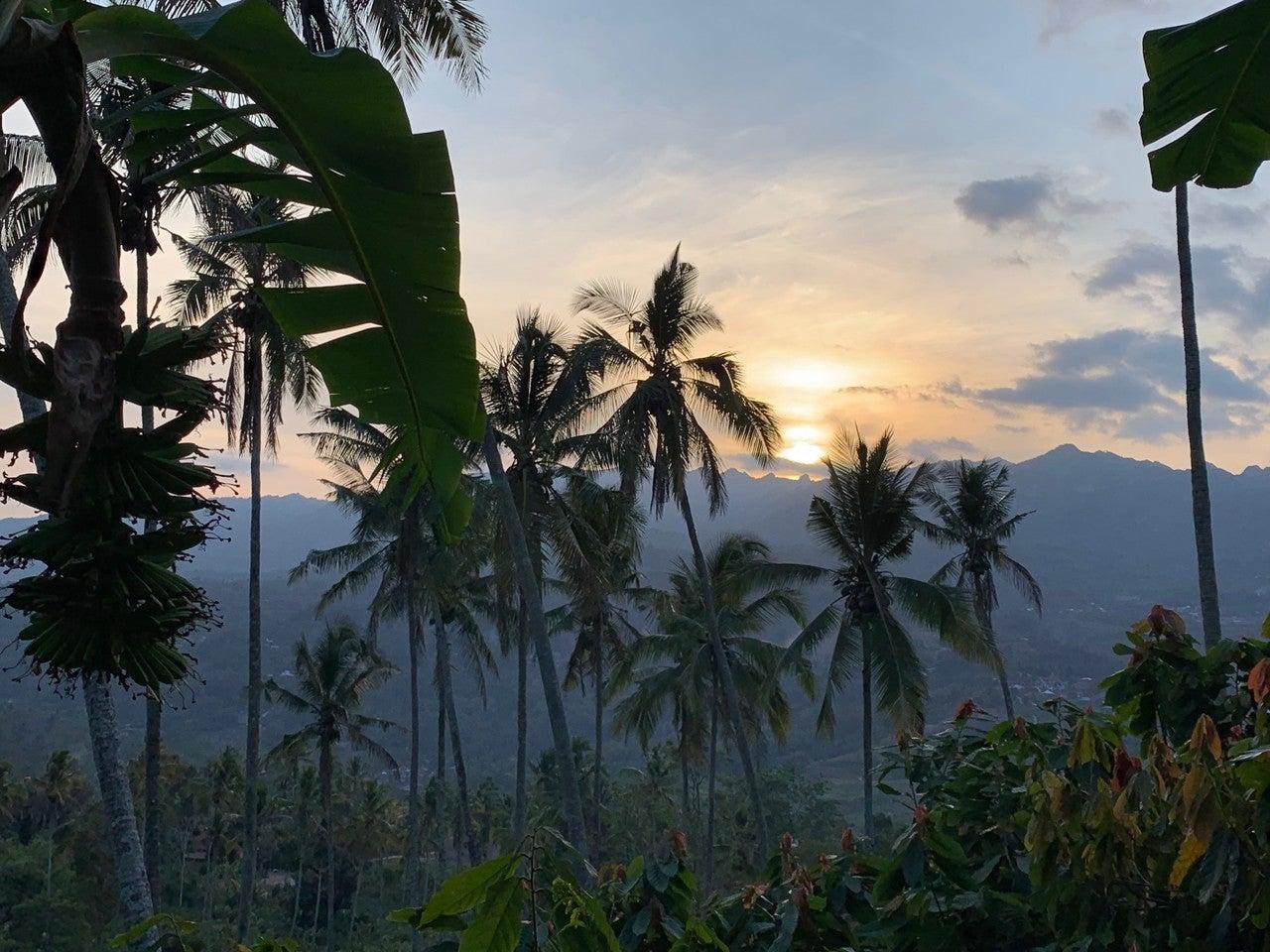 ⑯エンレカンの夕暮れとバナナの木