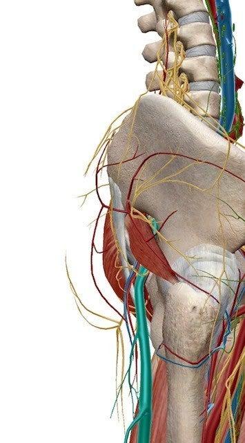神経痛 テスト 坐骨 坐骨神経痛の原因と治療法|やってはいけない事|文京区、春日・後楽園駅すぐの整体・整骨院