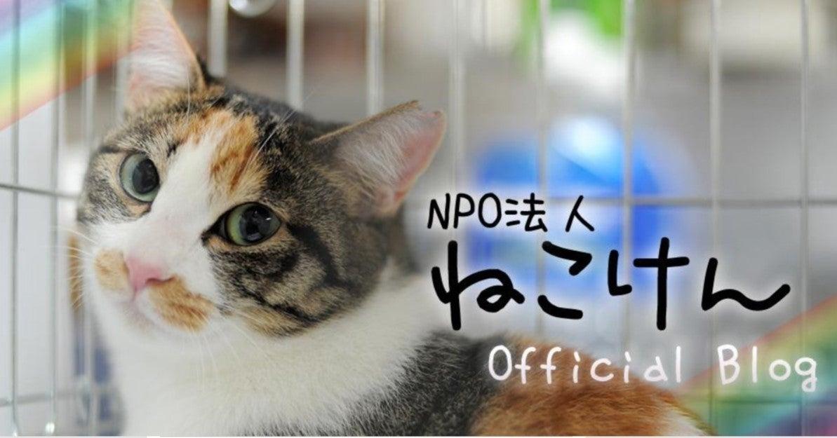 ブログ ねこ けん ねこけん保護猫ボランティアを始めたきっかけ⑩