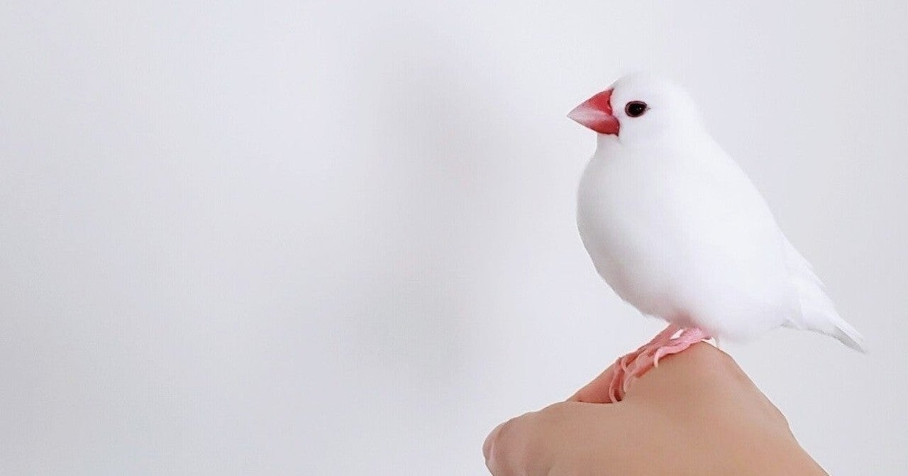 由来 文鳥 の