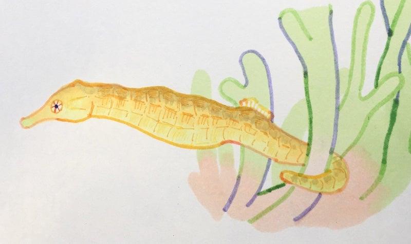 トゲトゲ ナシ トゲアリ トゲ