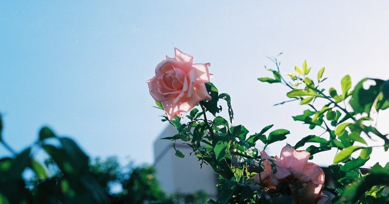 92. Eyes (by Anonymouz) 和訳|Takafumi Ito|note
