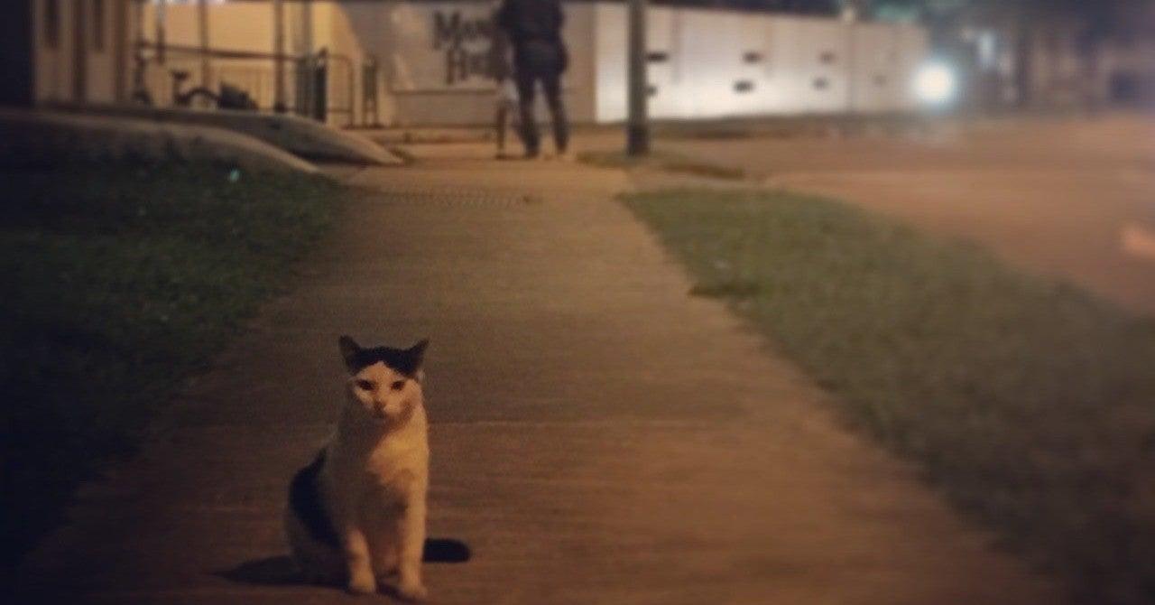 な たん 歌詞 なっ よ 猫 に だ