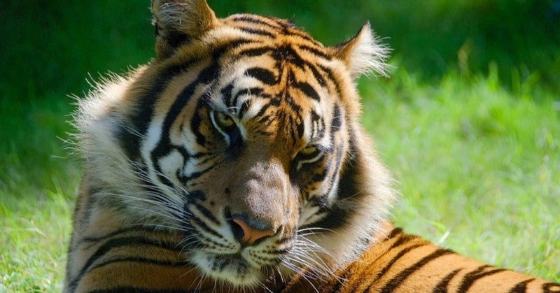 を 威 狐 意味 の 虎 借る