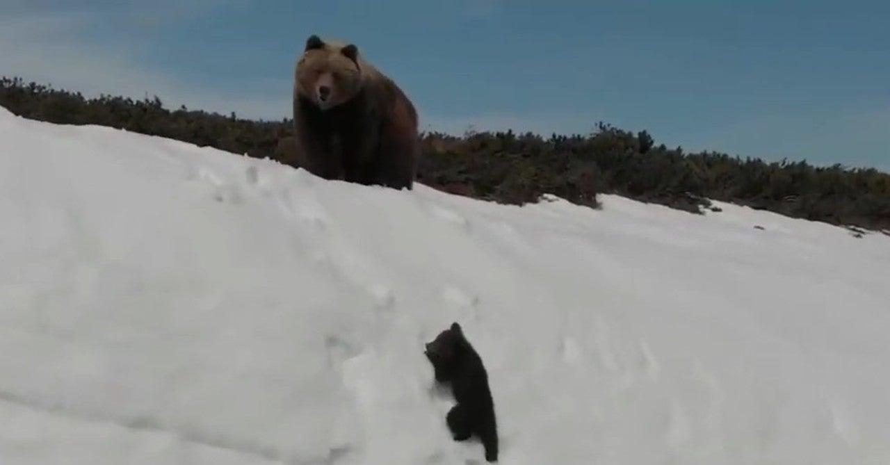 なめ とこ 山 の 熊 あらすじ 宮沢賢治「なめとこ山の熊」あらすじと感想「仕事」と「労働」は違う...