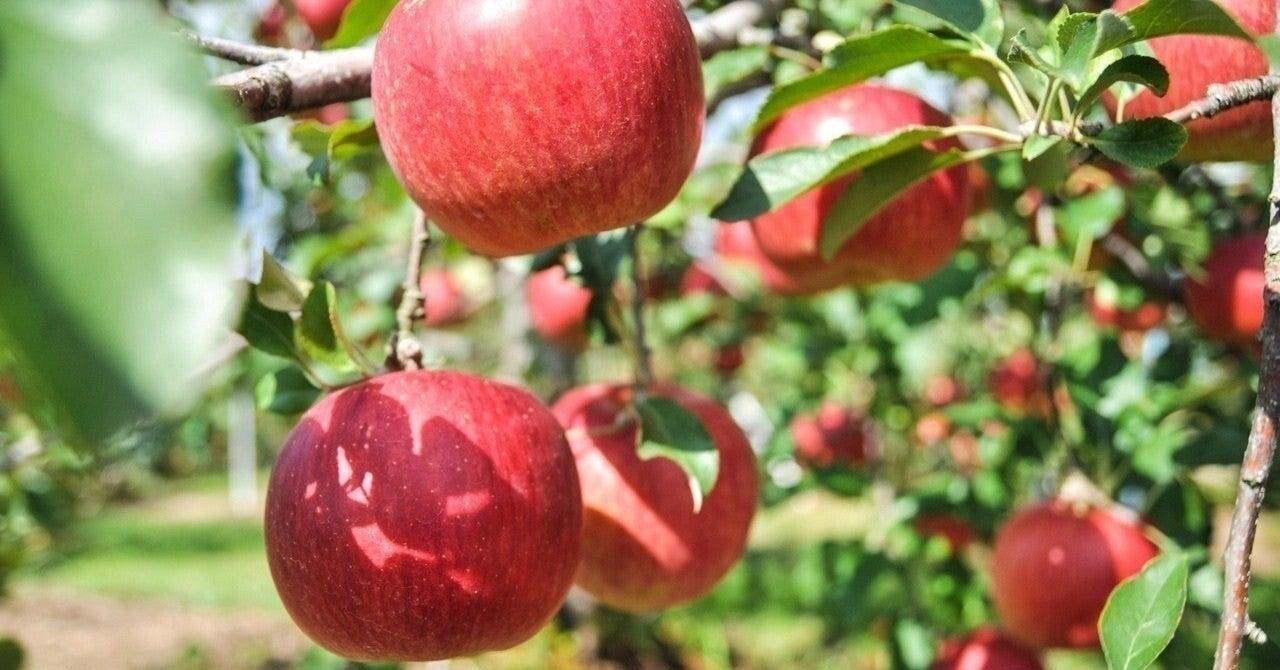 すっぱい りんご 剣 盾 ポケモン