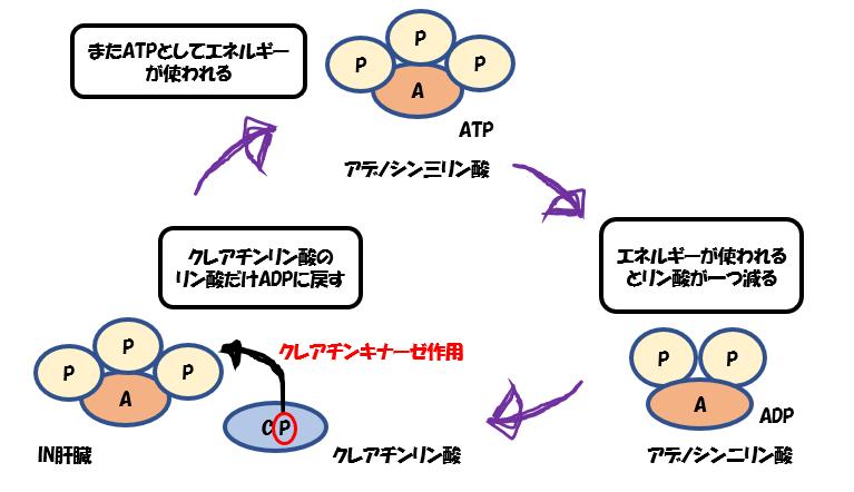 ホスファゲン機構
