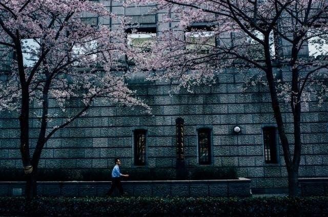 場所桜-6
