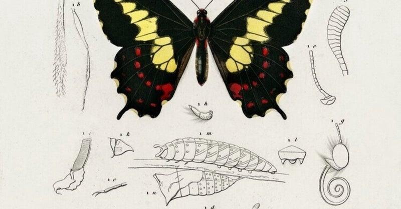 中身 さなぎ の 昆虫の蛹の中身はドロドロ?中身を混ぜるとどうなるのか