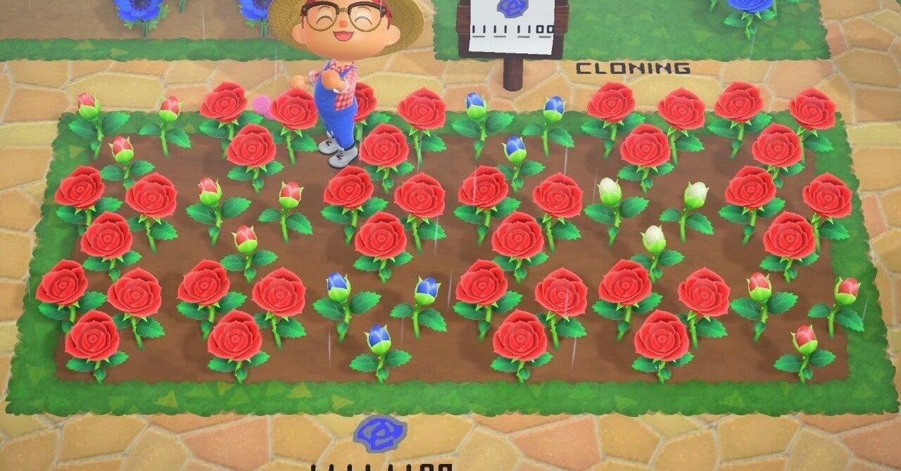 森 青い バラ あつ エリアに合わせていろいろな花を植えてみた!【あつ森日記#133】